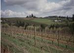 Dormant Vines 01