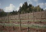 Dormant Vines 02