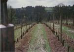 Dormant Vines 04