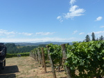 Alloro Vineyard View 01 by Linfield College Archives