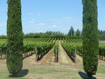 Alloro Vineyard View 02 by Linfield College Archives
