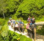Riding Elephants by Morgan Christiansen