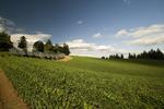 Solar Array, Sokol Blosser Winery
